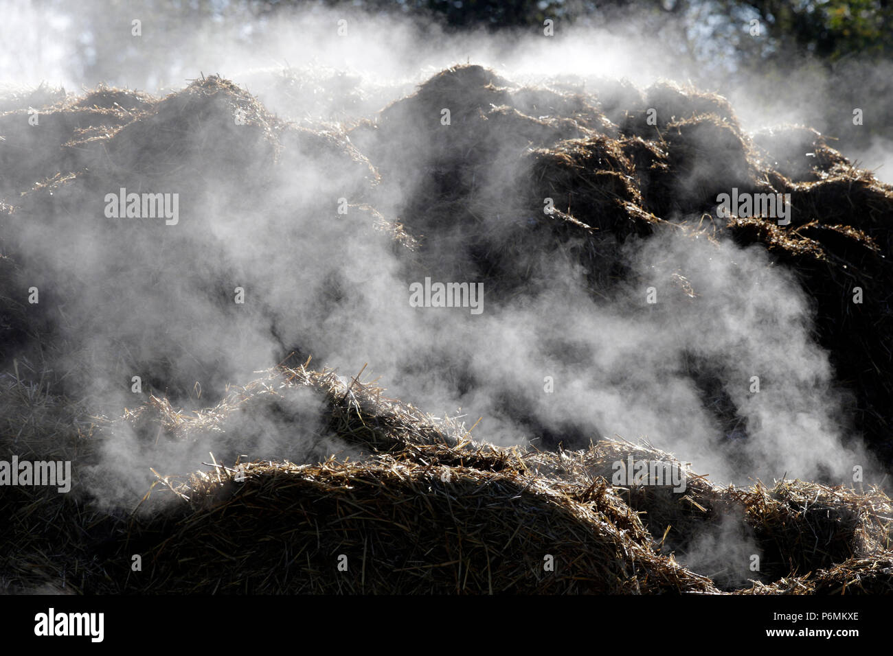 Studied Graditz, dung heap steaming in the back light - Stock Image