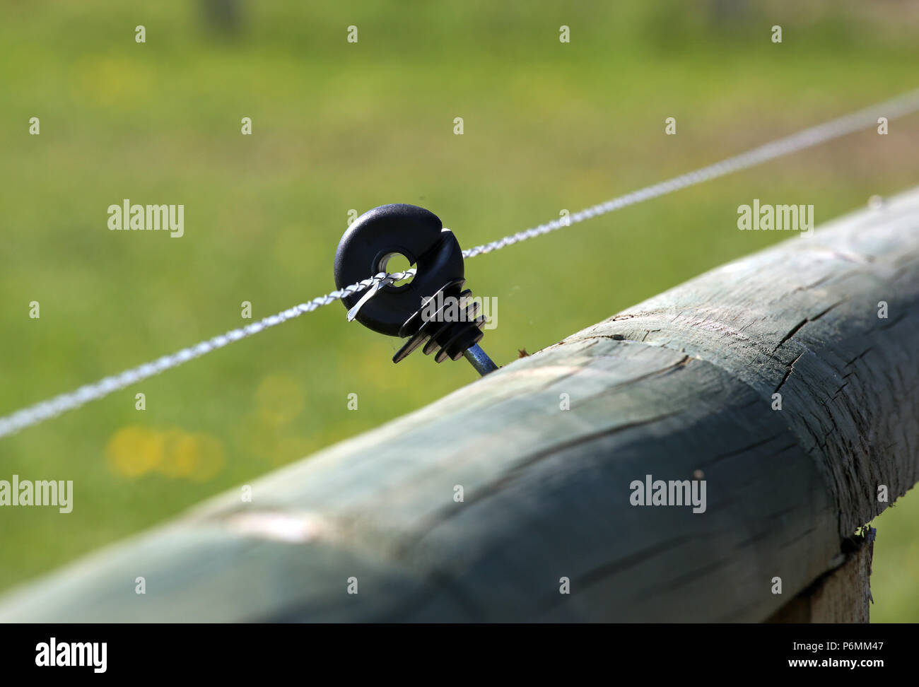 Gestuet Graditz, electric fence secured coupling fence - Stock Image
