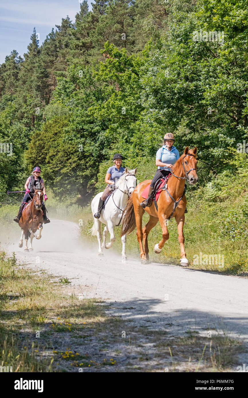 Horse riders on a forest trail, Wyre Forest, England, UK - Stock Image