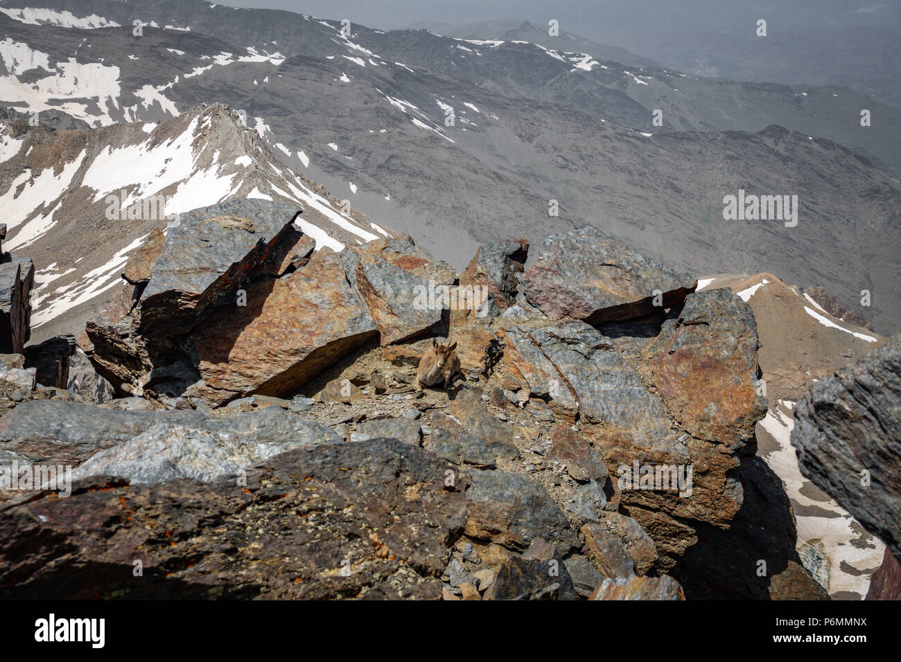 Mountain goat resting on top of mountain peak - Stock Image