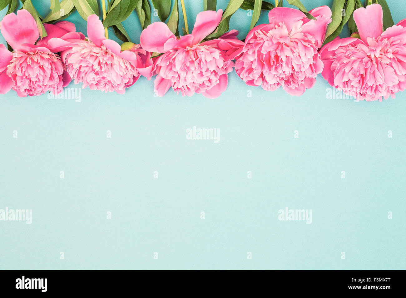 Beautiful Background With Border Of Pink Peony Flowers On Blue Top