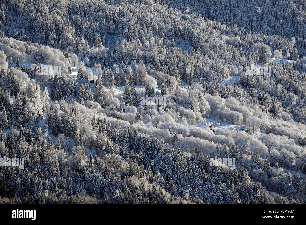 French Alps. Le Prarion. Snow covered fir trees in winter.  Saint-Gervais. France. - Stock Image