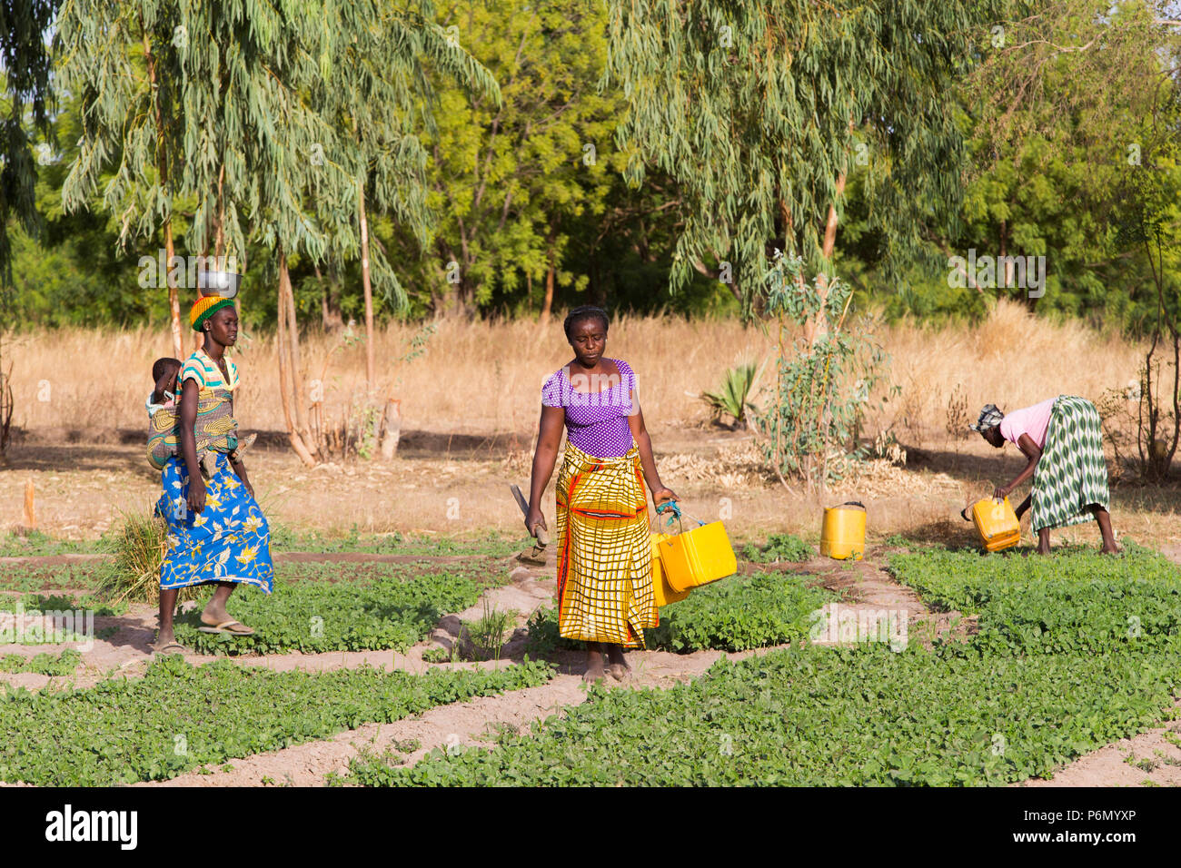 Women's cooperative members in a field in Karsome, Togo. - Stock Image