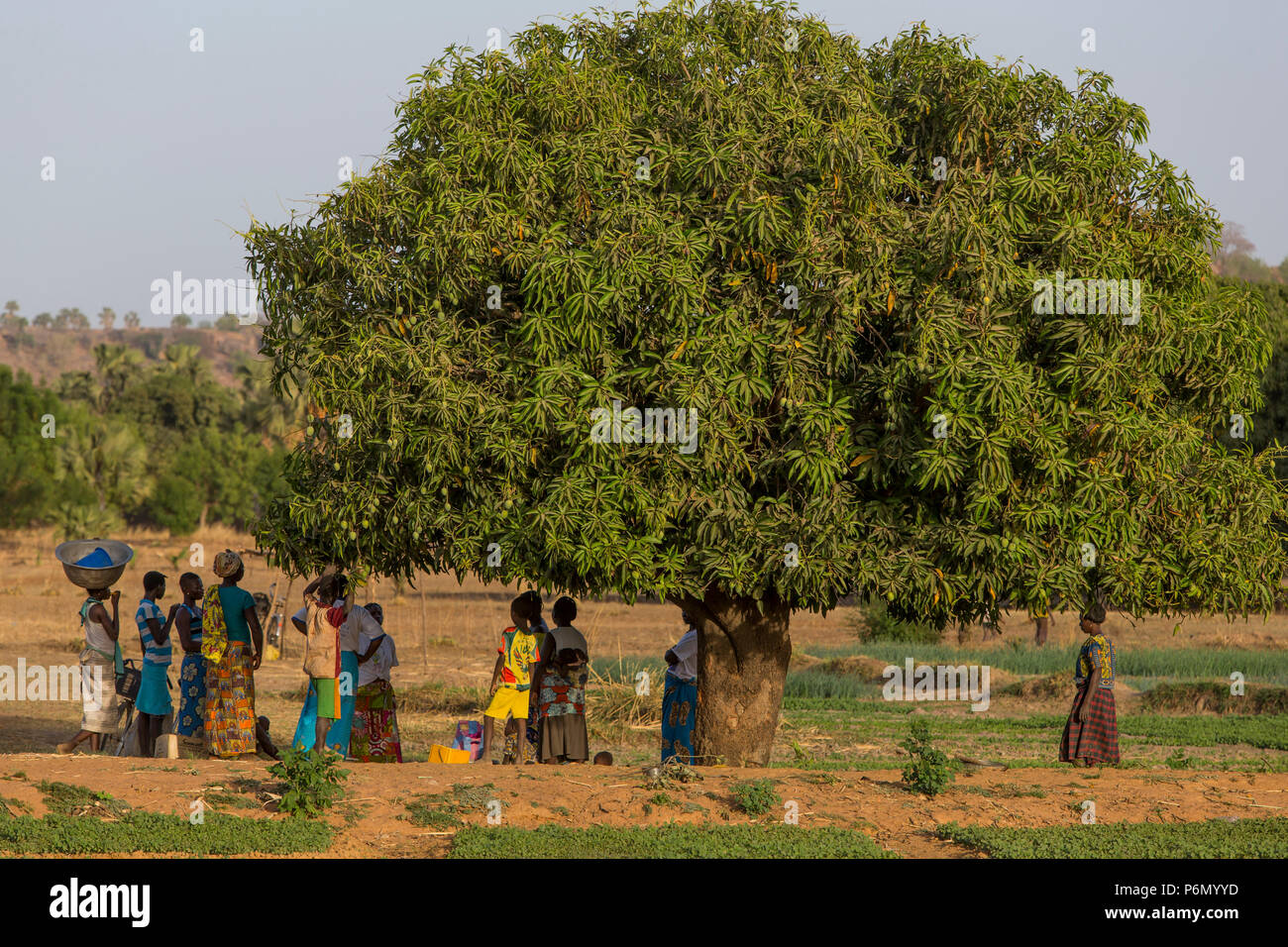 Members of a women's cooperative in a vegetable field in Karsome, Togo. - Stock Image