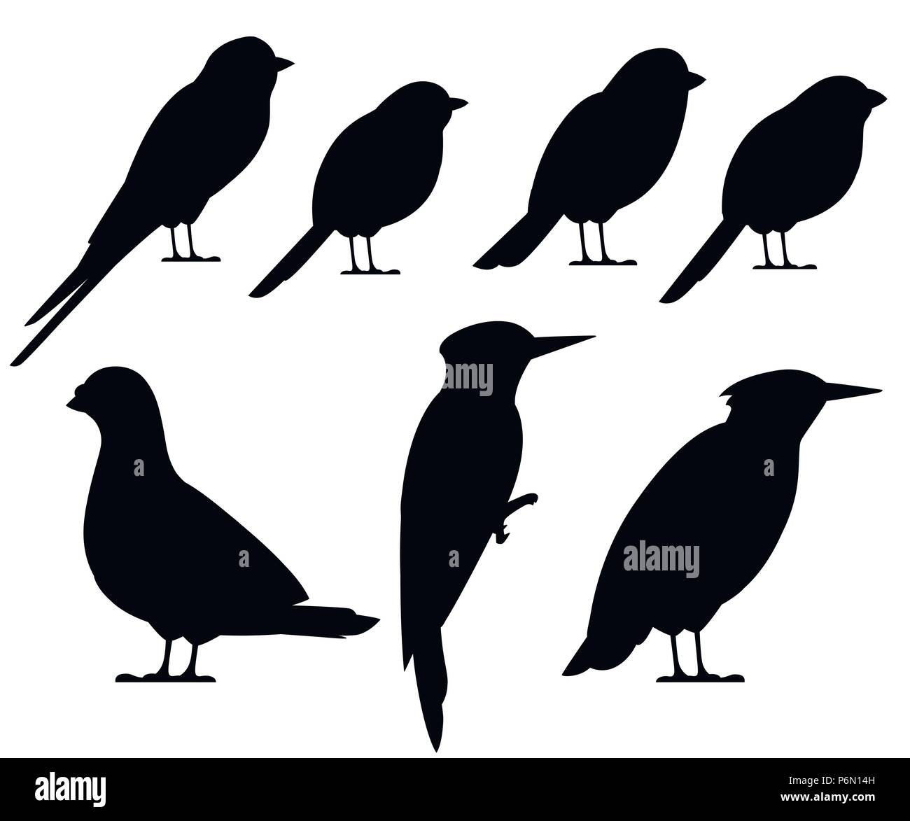 Bird Black Silhouette Collection Pigeon Sparrow Titmouse Swallow Woodpecker Starling