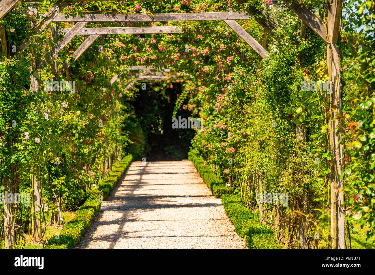 The spectacular Rose Garden within Parc de Bagatelle in Paris, France Stock Photo