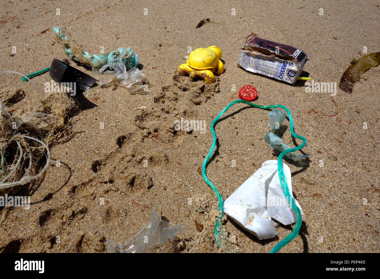 Plastic turtle thrown by the sea in a beach. Concept image depicting the plastic garbage pollution at the ocean. - Stock Image