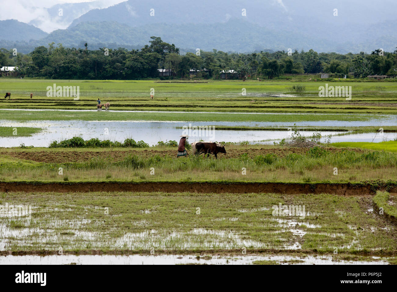 Landscape of Goainghat, Sylhet, Bangladesh. - Stock Image