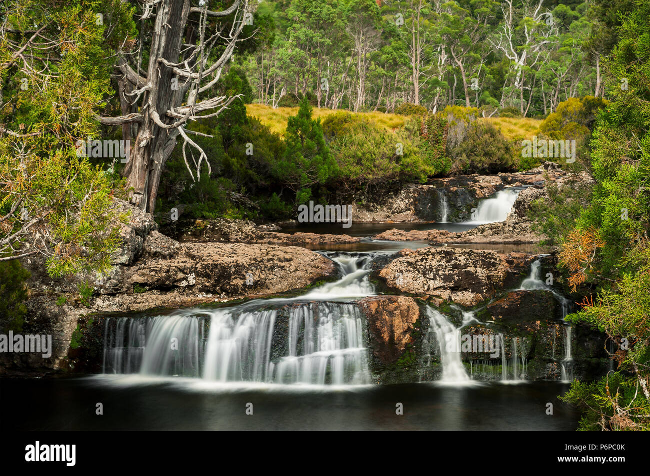 Pencil Pine Falls in Cradle Mountain & Lake St Clair National Park. - Stock Image