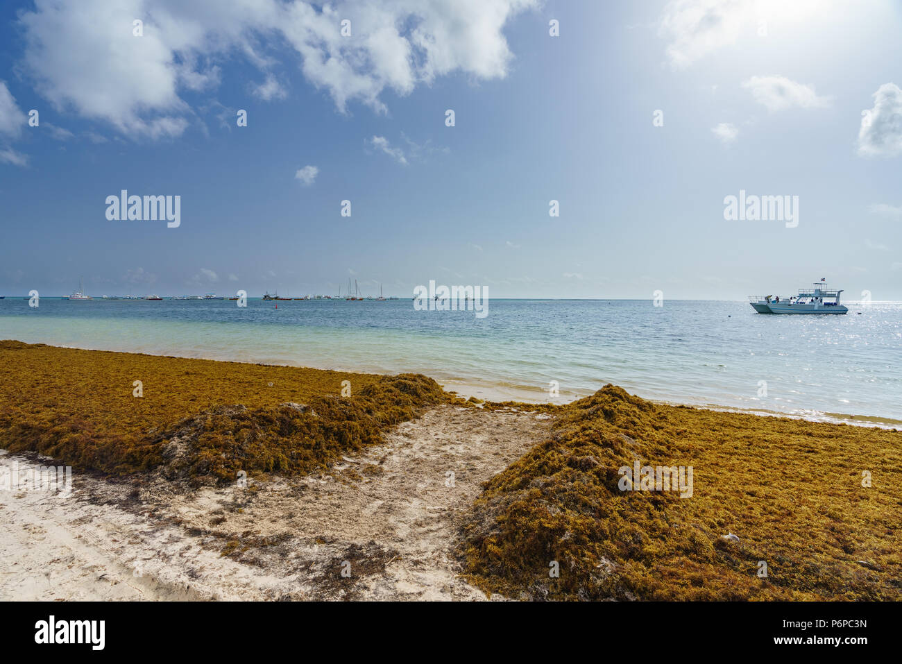 Punta Cana, Dominican Republic - June 17, 2018: sargassum seaweeds on the beaytiful ocean beach in Bavaro, Punta Cana, the result of global warming climate change. - Stock Image