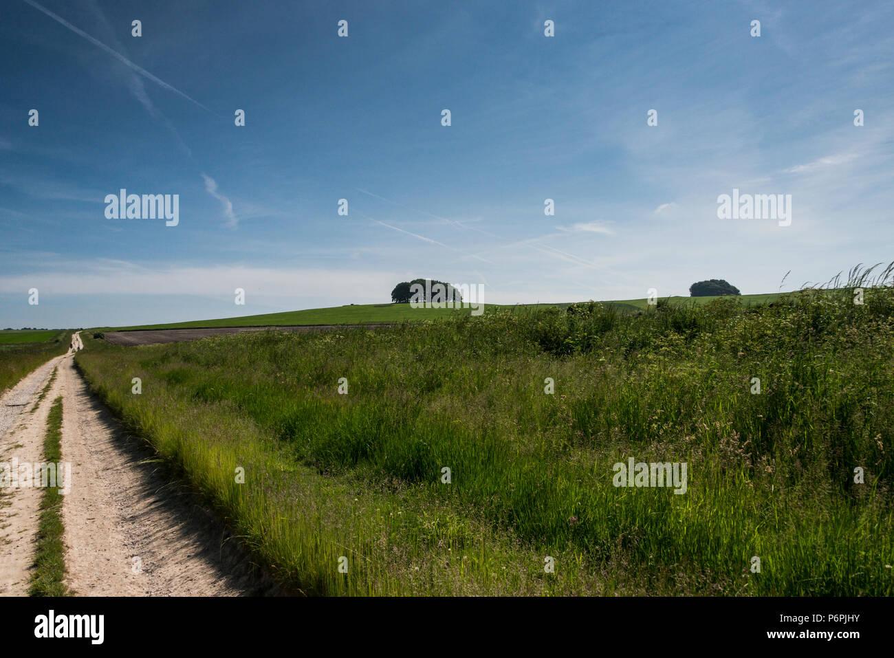 Paths near Avebury, Wiltshire - Stock Image