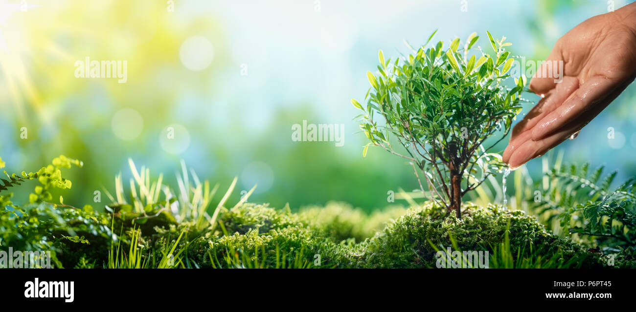 Hand watering small plant in the morning - Stock Image