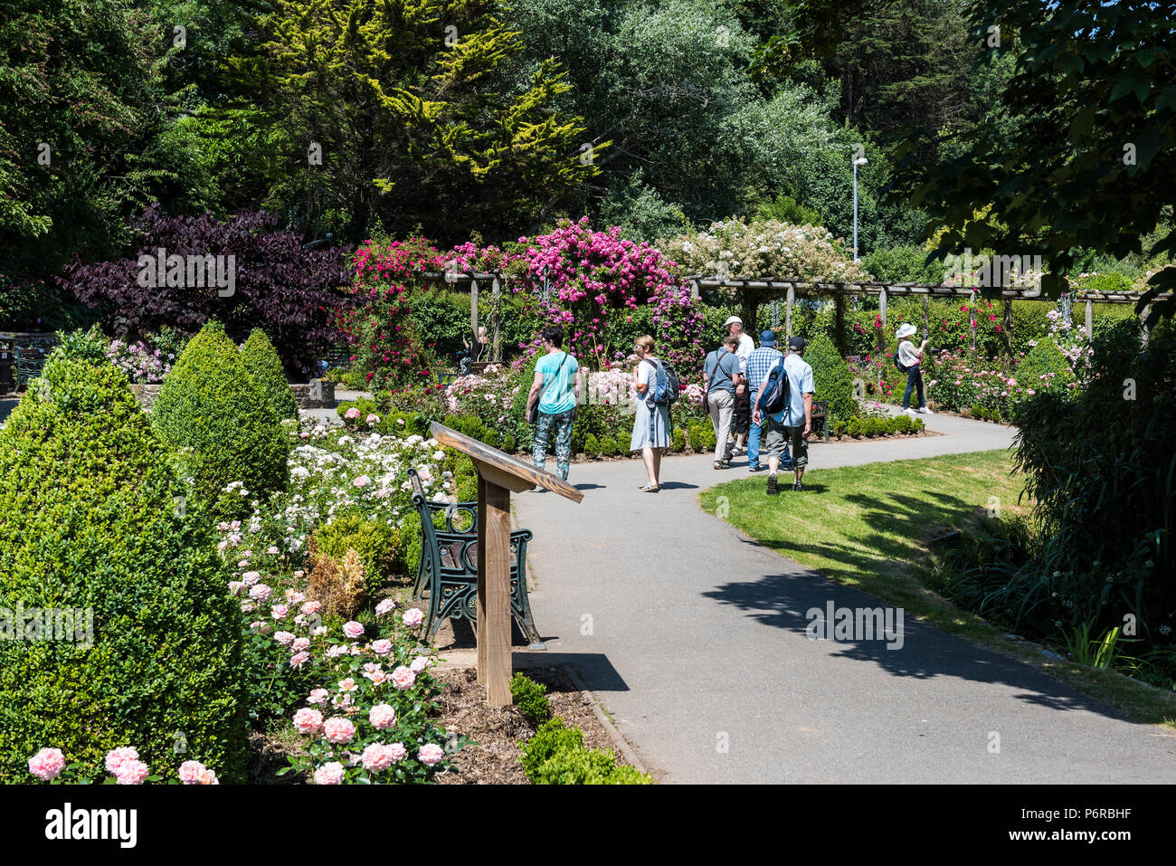 Holidaymakers walking through the award winning Rose Garden in Trenance Park in Newquay in Cornwall. - Stock Image