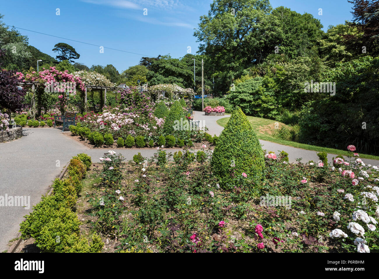 Roses in full bloom in the award winning Rose Garden in Trenance Park in Newquay in Cornwall. - Stock Image