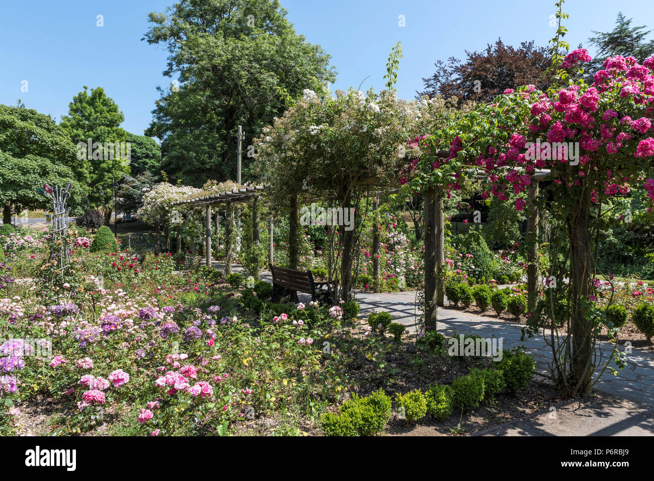 A pergola covered in climbing roses in the award winning Rose Garden in Trenance Park in Newquay in Cornwall. - Stock Image