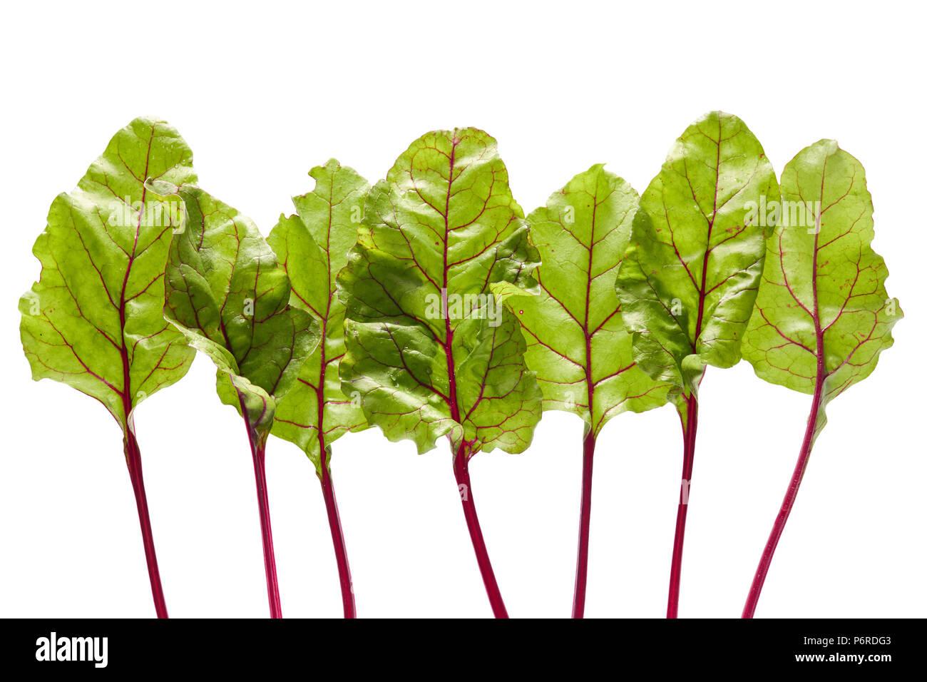 Fresh organic beetroot leaves, on white background - Stock Image