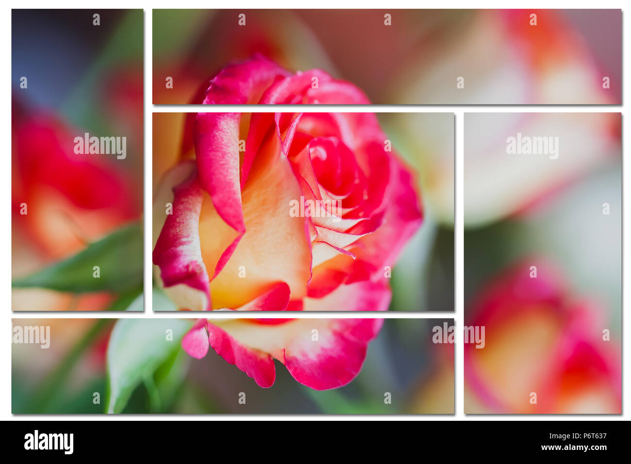 Collage From Fragments Of A Rose Flower Macro Close Up Floral
