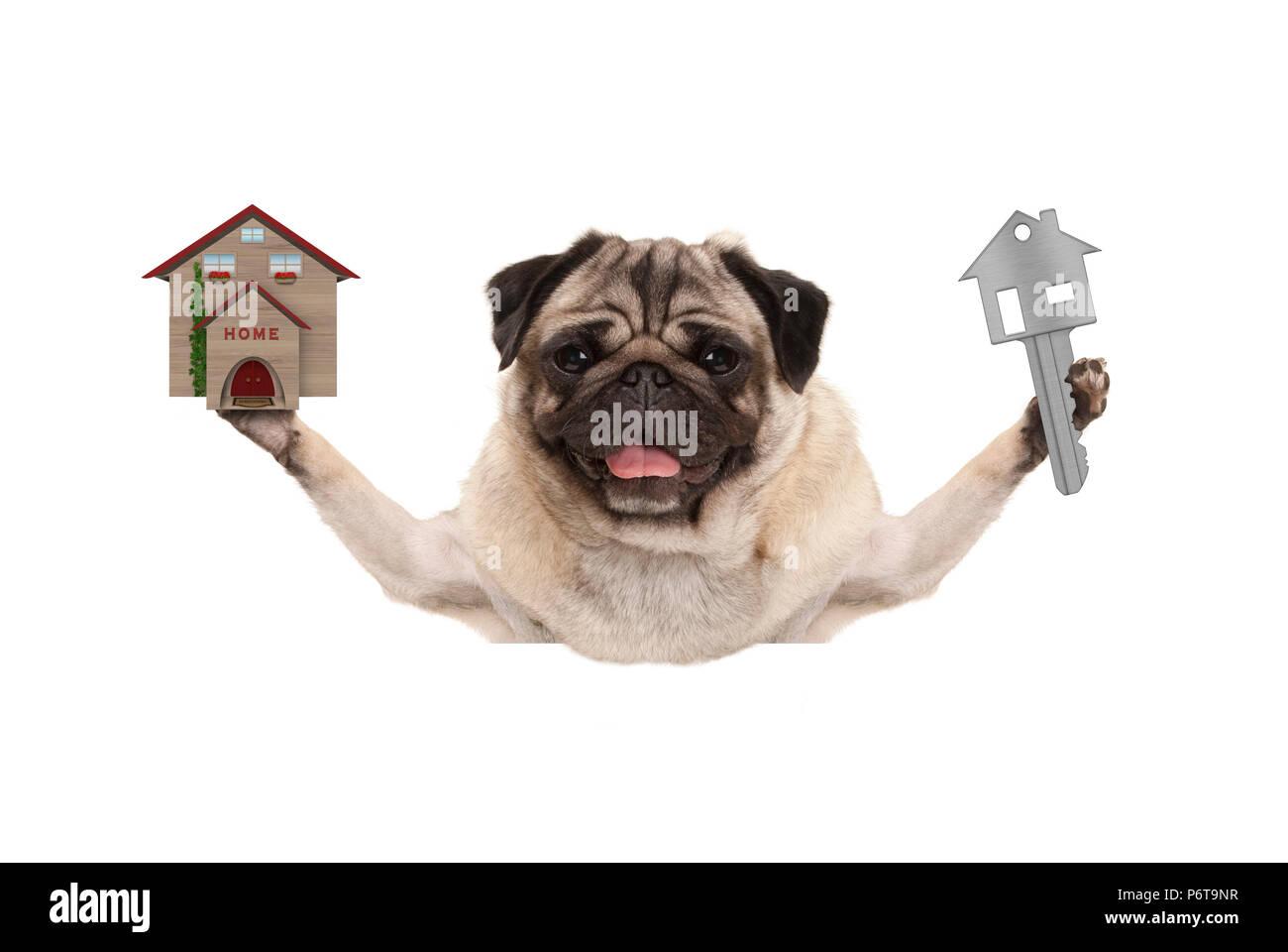smiling happy pug puppy dog holding up house key and miniature house, isolated on white background Stock Photo
