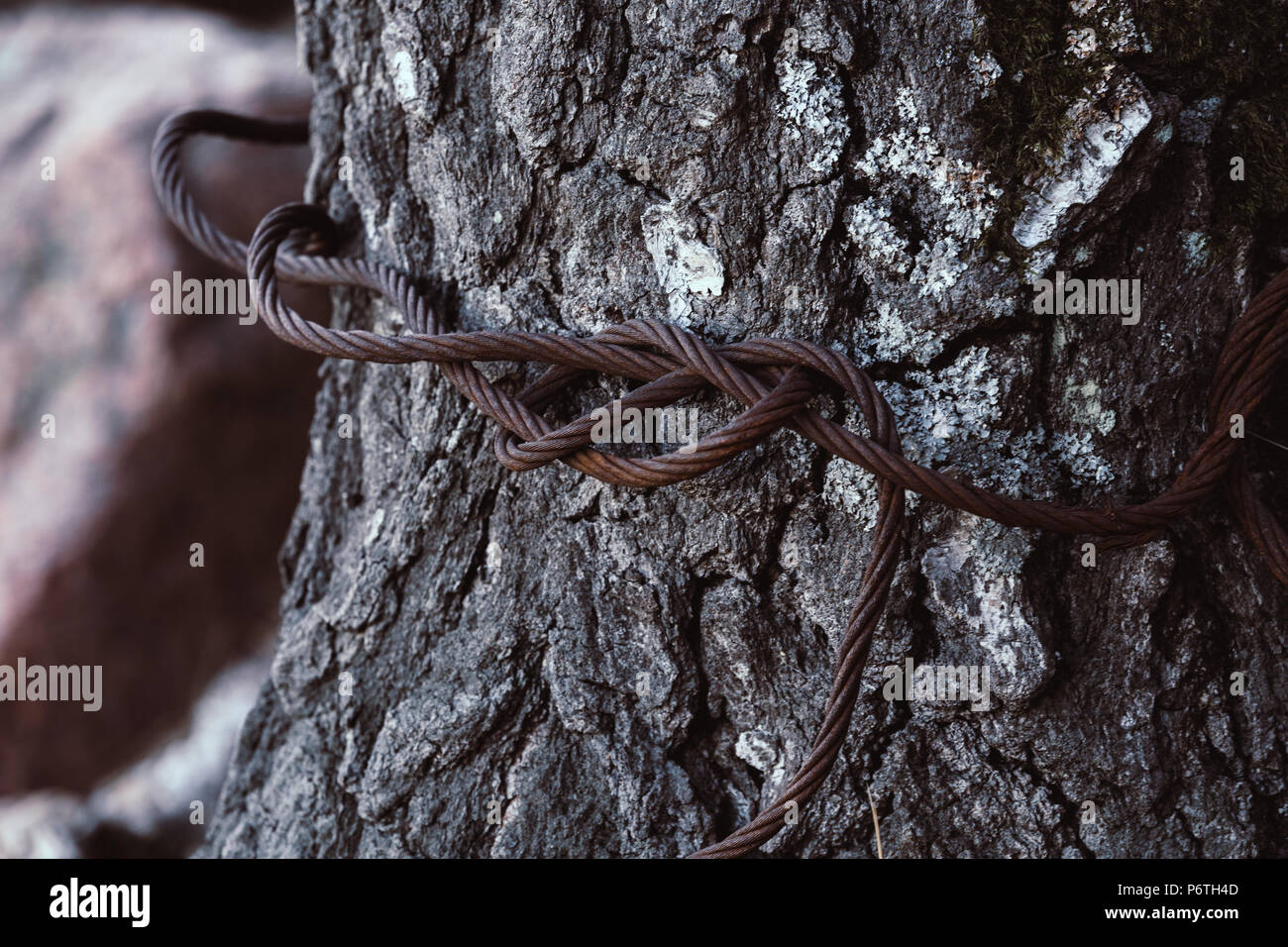 Rusty Steel Cable Stock Photos & Rusty Steel Cable Stock Images - Alamy