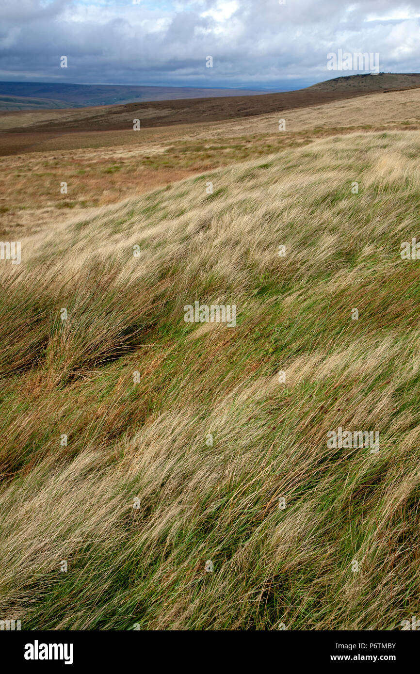 Saddleworth Moor is a moorland in North West England. Reaching more than 1,312 feet above sea level, it is in the Dark Peak area of the Peak Districts - Stock Image