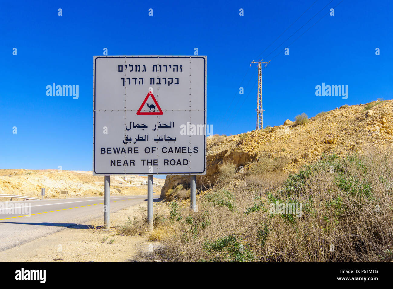 Trilingual warning sign, beware of camels near the road, in the Negev desert, southern Israel Stock Photo