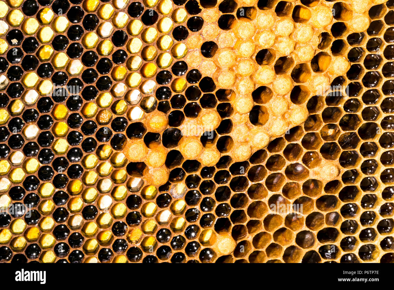 honeycomb background image, the concept of the World Wide Web - Stock Image