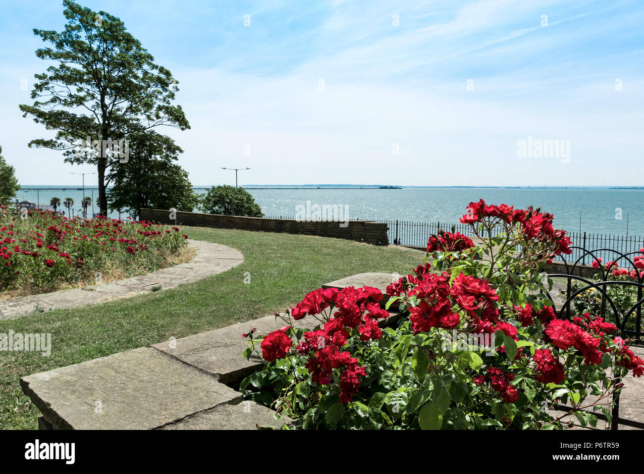 Formal planting with coastal aspect, red roses bloom well overlooking the sea. - Stock Image