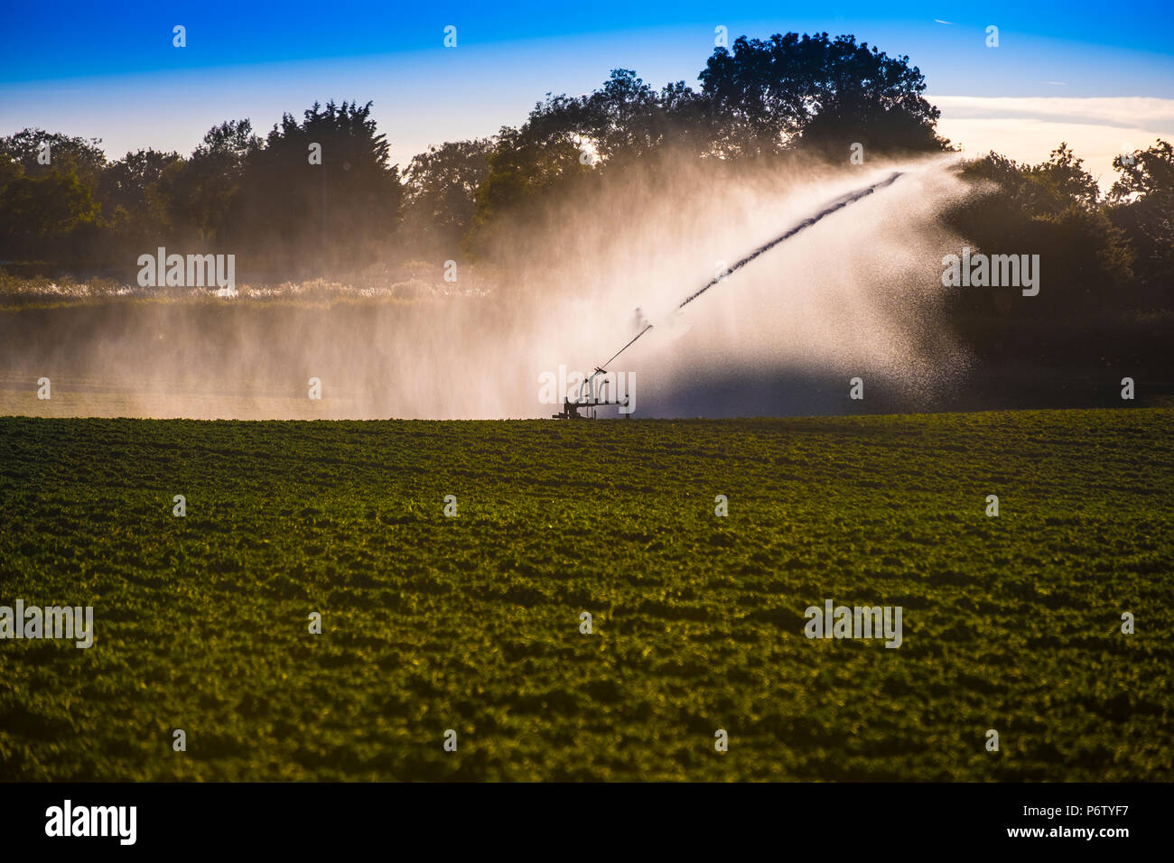 Watering a potato field during a very dry summer. Norfolk, UK. Backlit by the evening sun. - Stock Image