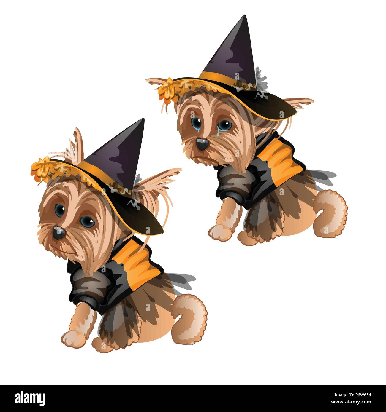 yorkshire terrier in witch costume isolated on white background