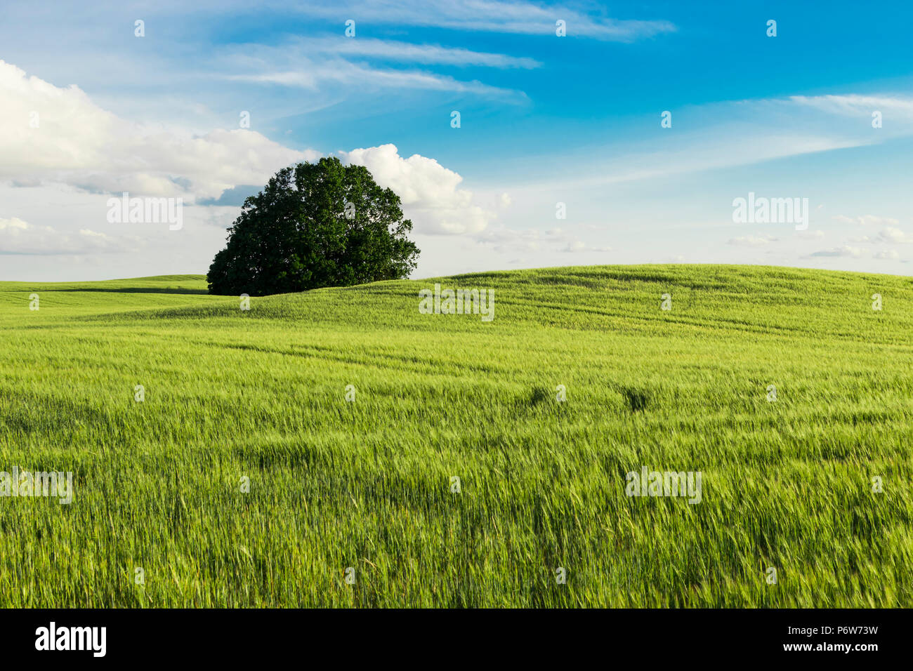 Greenfield view - Stock Image