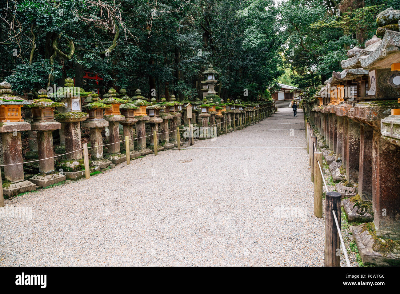 Japanese traditional stone lanterns and forest road in Nara, Japan - Stock Image