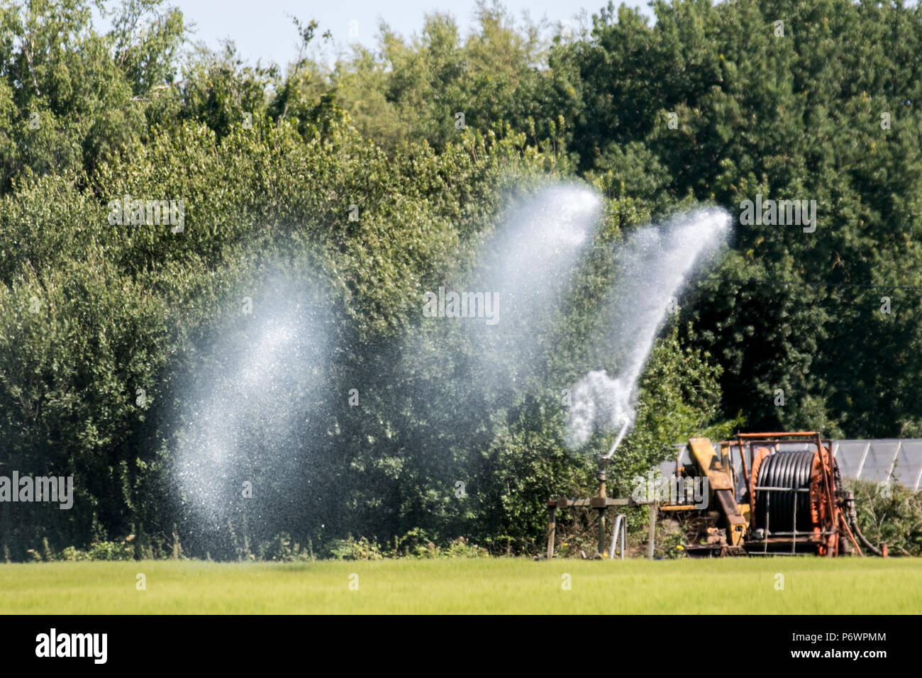 Burscough, Lancashire. UK Weather. 03/07/2018. Circle Irrigation, or centre-pivot irrigation with farmers watering parched crops and newly planted fields. Water is supplied from the nearby Leeds Liverpool canal and pumped to the sprayer by tractor. Credit: MediaWorldImages/AlamyLiveNews. - Stock Image