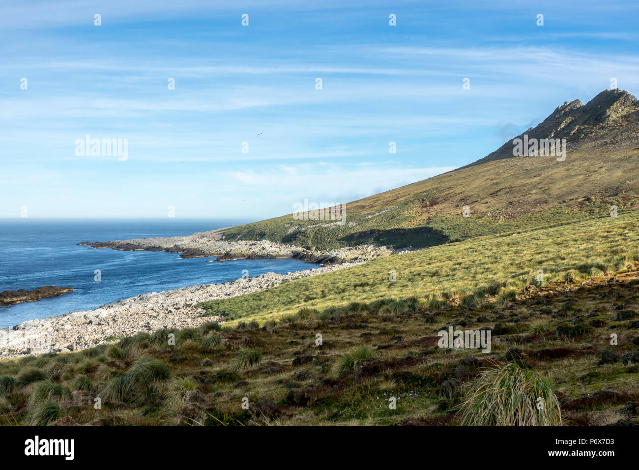 The massive black-browed albatross colony at Steeple Jason Island, Falkland Islands Stock Photo