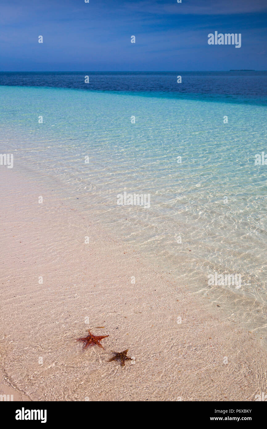 Cuba, Pinar del Río Province, Cayo Levisa, Starfish on white sand beach - Stock Image