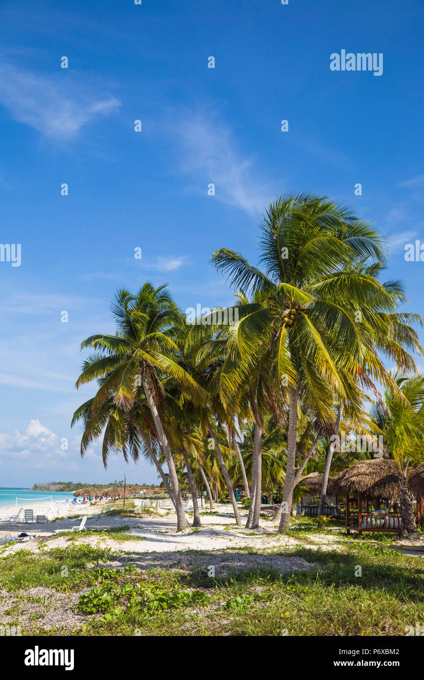 Cuba, Pinar del Río Province, Cayo Levisa, Palm trees on white sand beach - Stock Image