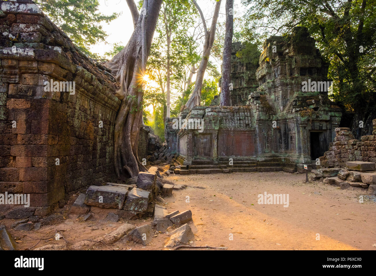 Ta Prohm temple (Rajavihara), Angkor, UNESCO World Heritage Site, Siem Reap Province, Cambodia Stock Photo
