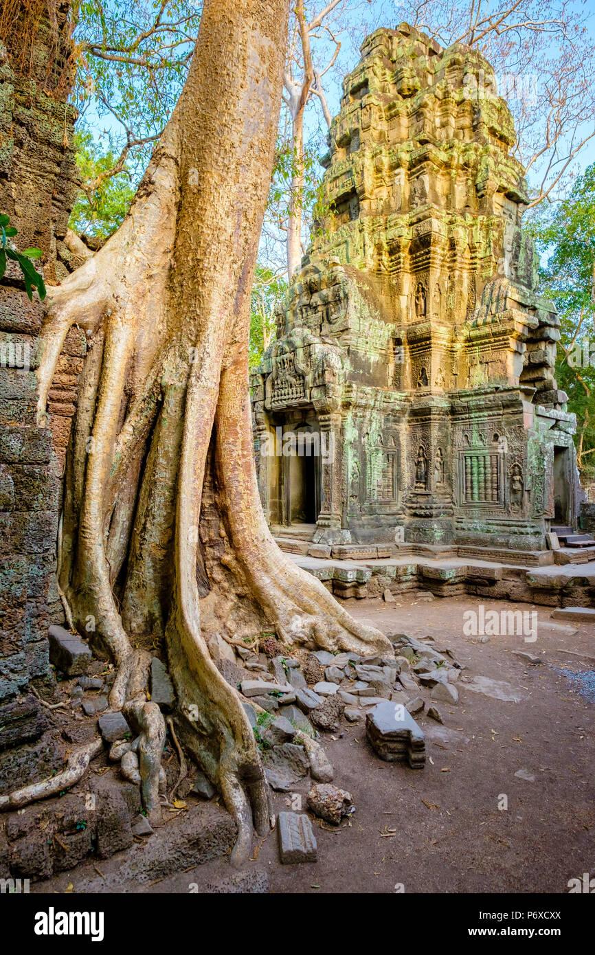 Ta Prohm temple ruins, Angkor, UNESCO World Heritage Site, Siem Reap Province, Cambodia Stock Photo
