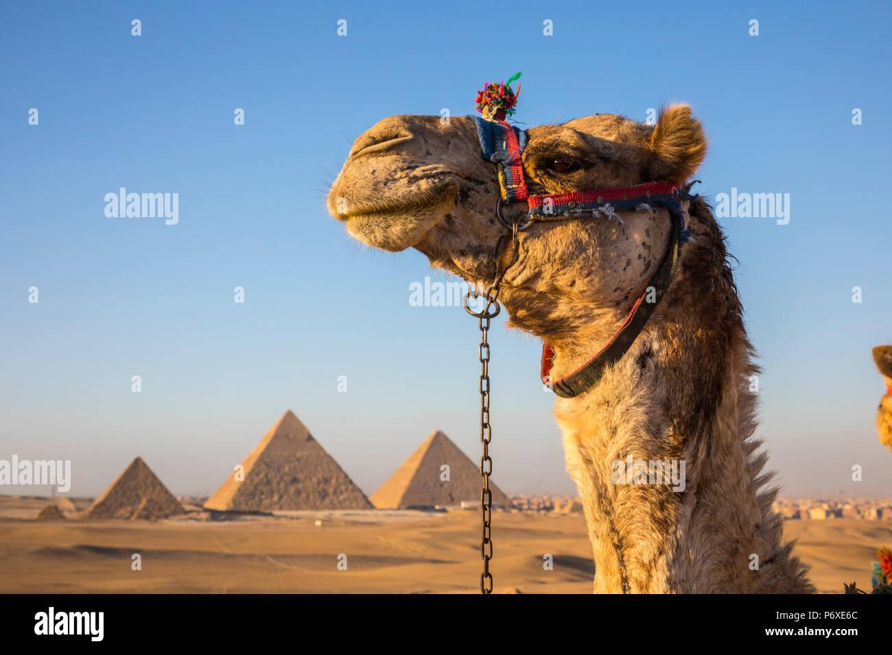 Pyramids of Giza, Giza, Cairo, Egypt - Stock Image