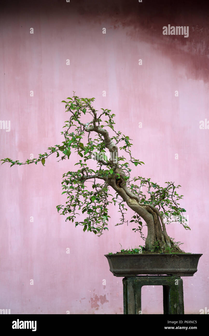 Bonsai at Pagoda of the Celestial Lady, Hue , Vietnam - Stock Image