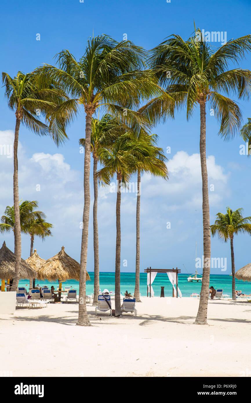 Caribbean, Netherland Antilles, Aruba, Palm beach - Stock Image