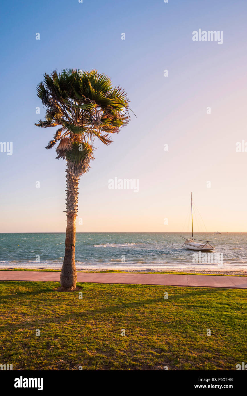 Denham, Shark Bay region, Western Australia, Australia. Palm trees on the seafront at sunset. - Stock Image