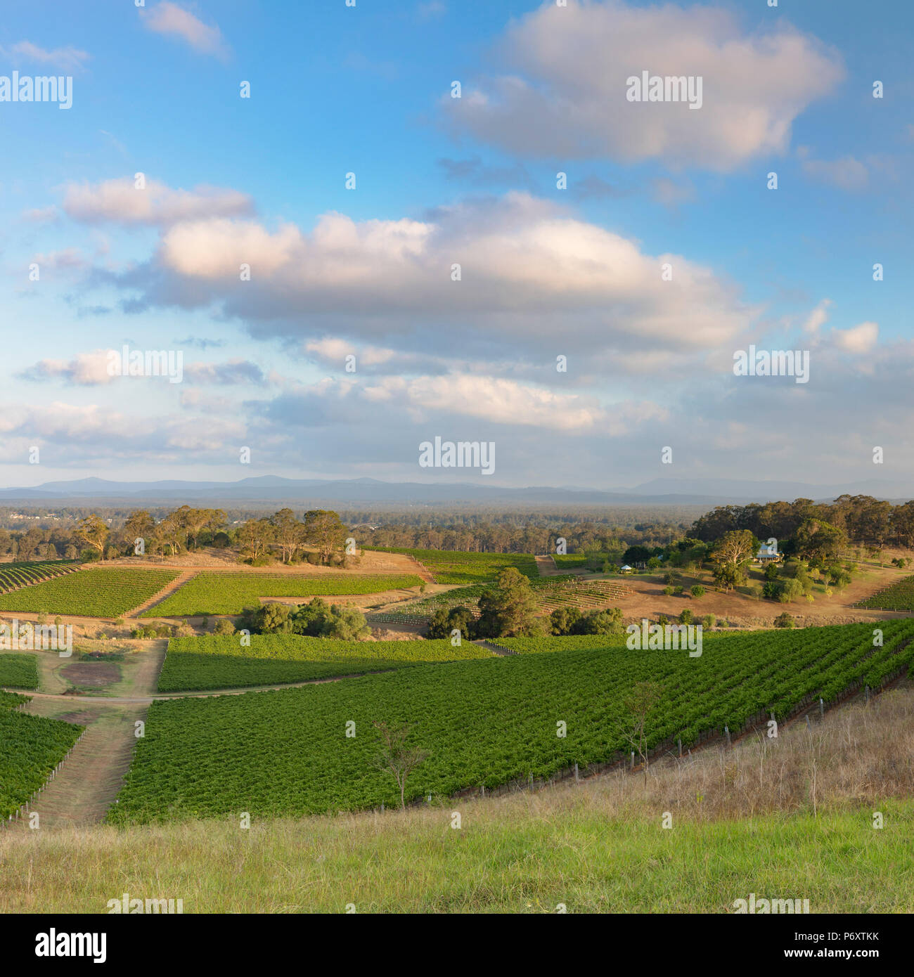 View of vineyards, Hunter Valley, New South Wales, Australia - Stock Image