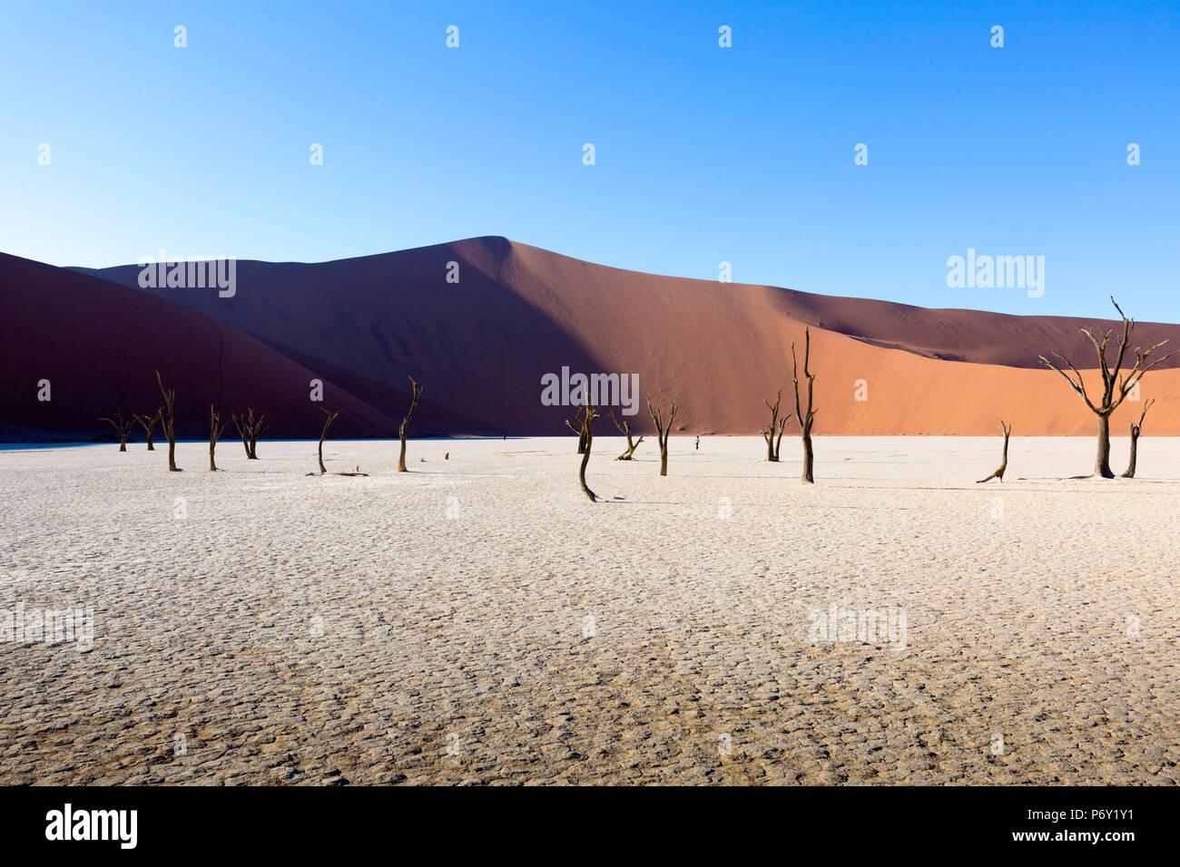 Dead Vlei, Sosussvlei, Namibia, Africa - Stock Image