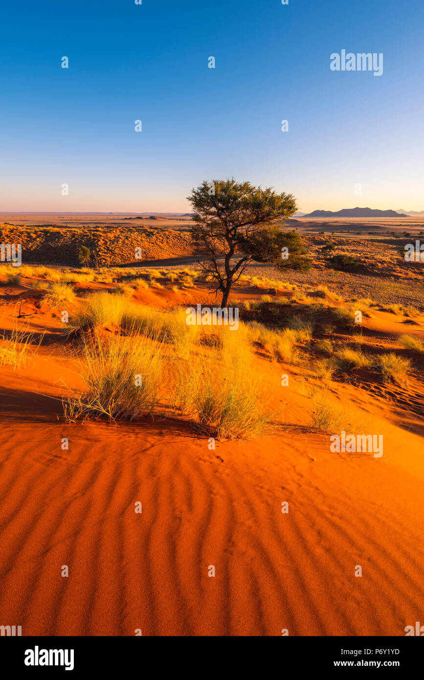 Namib-Naukluft National Park, Namibia, Africa. Petrified red dunes. - Stock Image