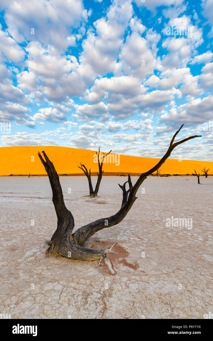 Deadvlei clay pan, Namib-Naukluft National Park, Namibia, Africa. Dead acacia trees and sand dunes. - Stock Image