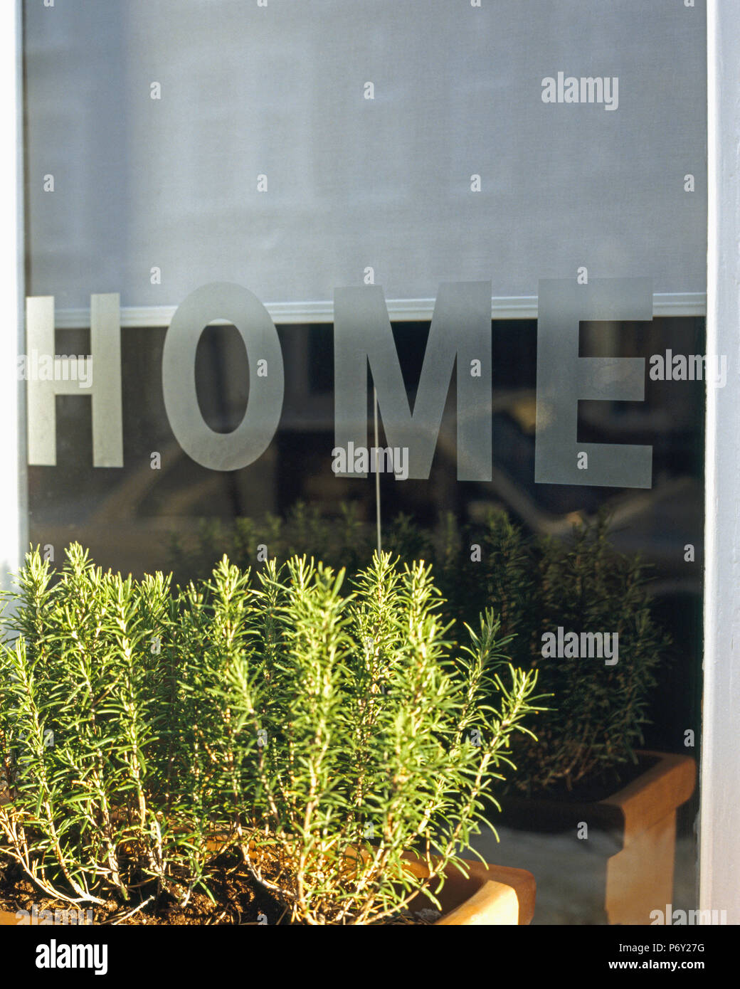 "Close-up of rosemary in window box in front of window with engraved Home"" motif Stock Photo"