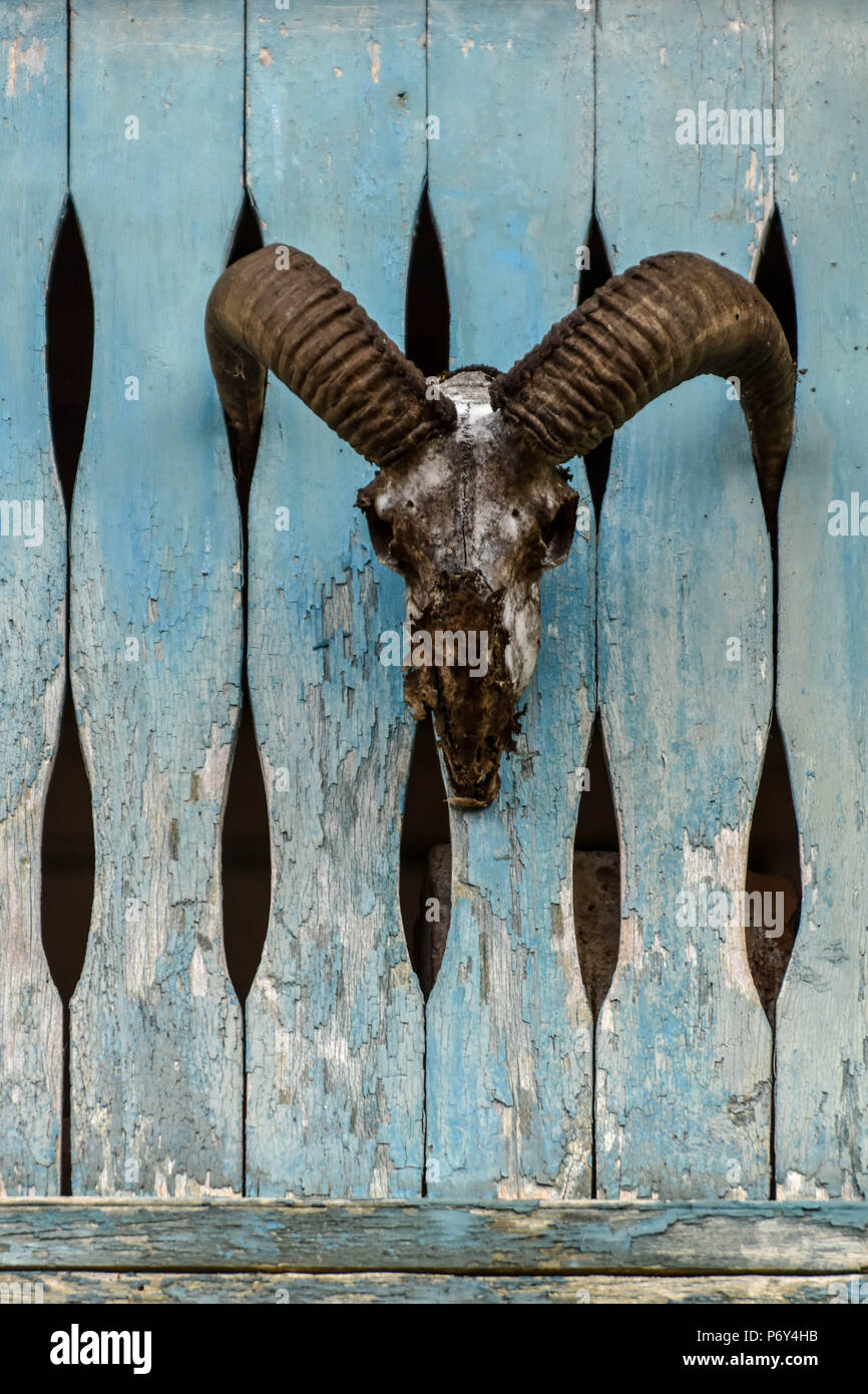 The skull of an animal with large horns mounted on a worn-out wooden fence - Stock Image
