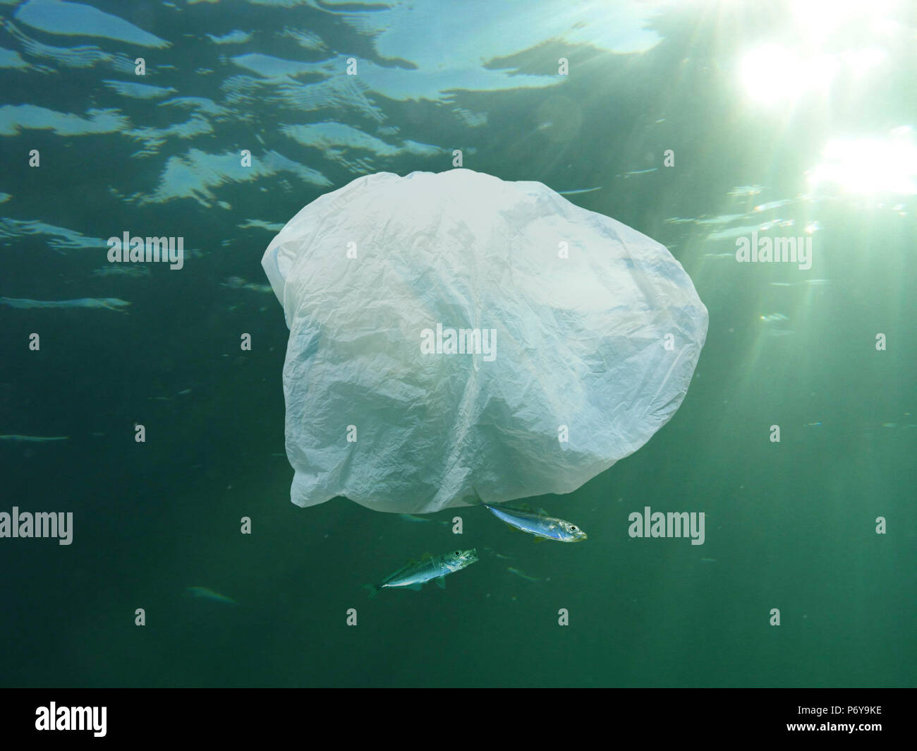 Plastic bag accompanied by two young horse mackerel. - Stock Image