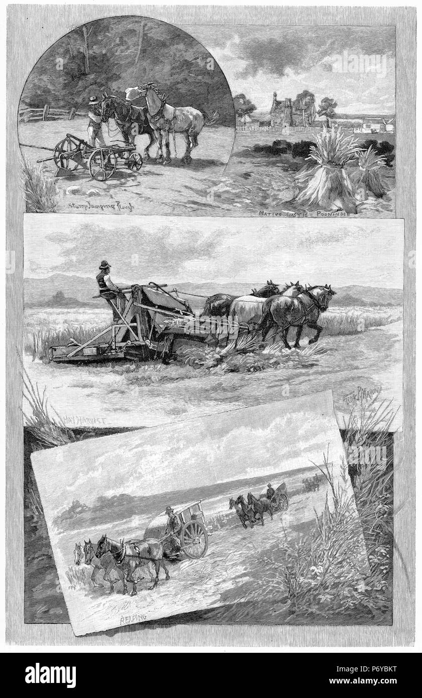 Engraving of a montage of harvesting operations in Australia, circa 1880. From top: stump jump plough; making hay, reaping the grain harvest. From the Picturesque Atlas of Australasia Vol 2, 1886 - Stock Image