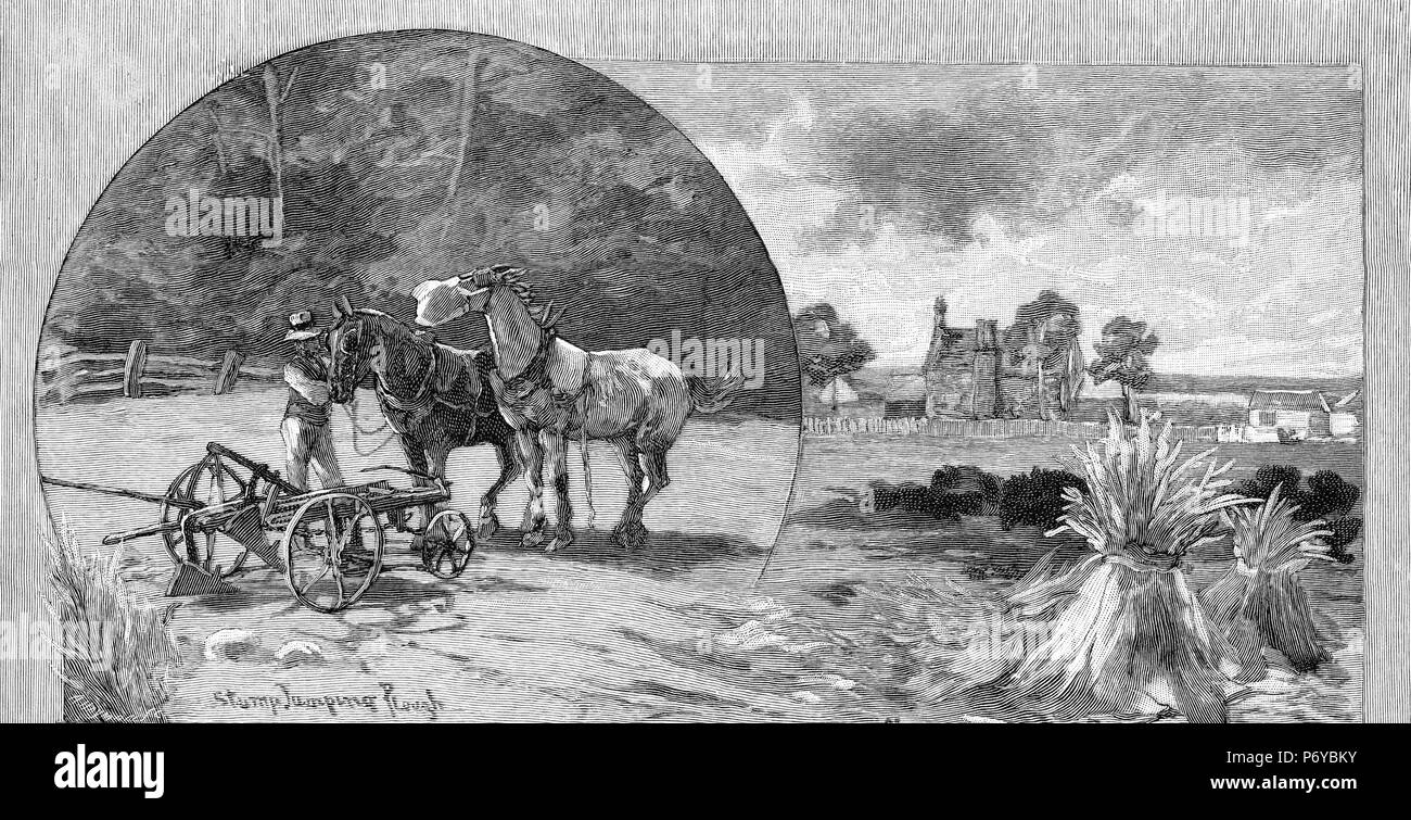 Engraving of a farmer harnessing up the stump jumping plough to his horses in Victoria, Australia, circa 1880. From the Picturesque Atlas of Australasia Vol 2, 1886 - Stock Image